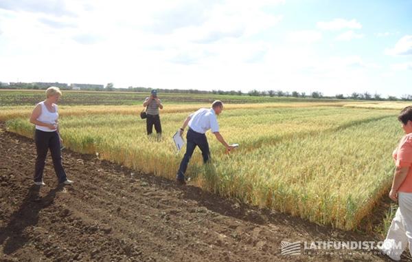 Люк берет пробы различных селекций озимой пшеницы, которых тут более 170 видов