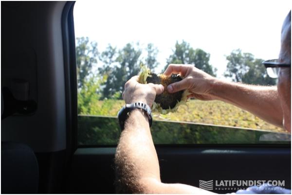 Люк Лоран гадает на подсолнухе