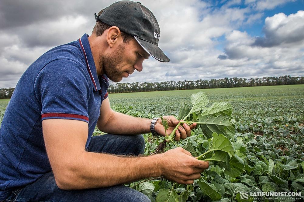 Федор Куртев показывает посевы