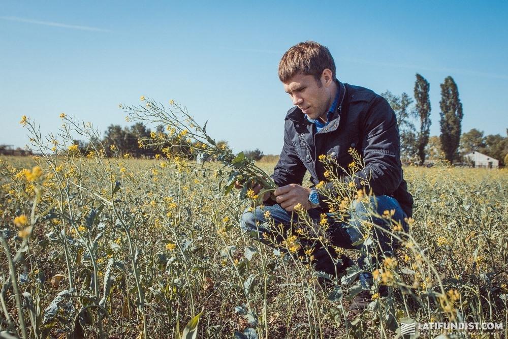 Признаков повреждения болезнями на растениях мы не увидели