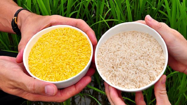 Золотой и белый рис