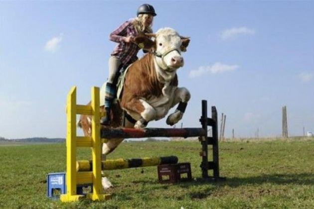 Как корове седло...
