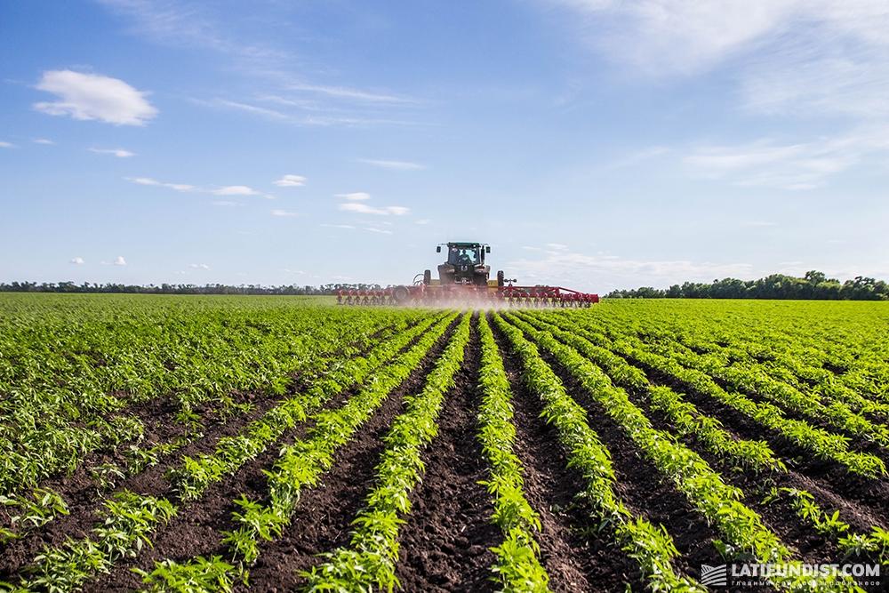 Техника работает в поле органической конопли агропромышленной группы «Арника». Фото — Latifundist.com, холдинг «Арника»