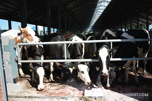Ферма «Терезино»