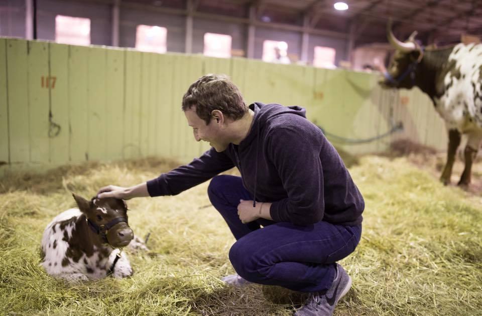 Периодически по сети распространяются фото, на которых интернет-гений с головой погружается в сельскую жизнь: ездит на ретро-тракторе, высаживает сады в Далласе или доит корову в Висконсине