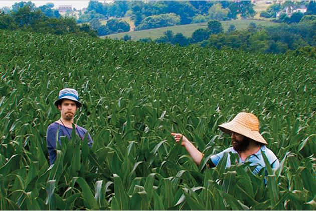 Зак Галифианакис с приятелем на кукурузном поле