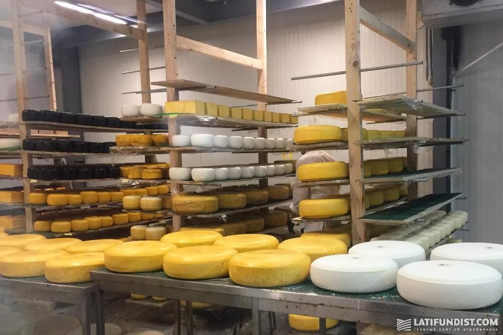 Производство сыров в Украине