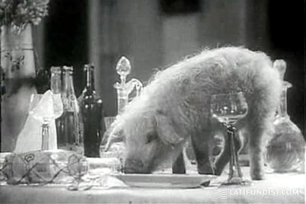 Советское животноводство по Александрову