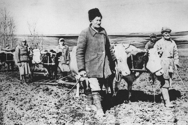 На полях Каменец-Подольской (ныне - Хмельницкой) области. 1946 год