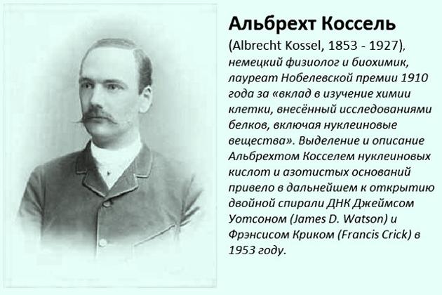 Альбрехт Коссель
