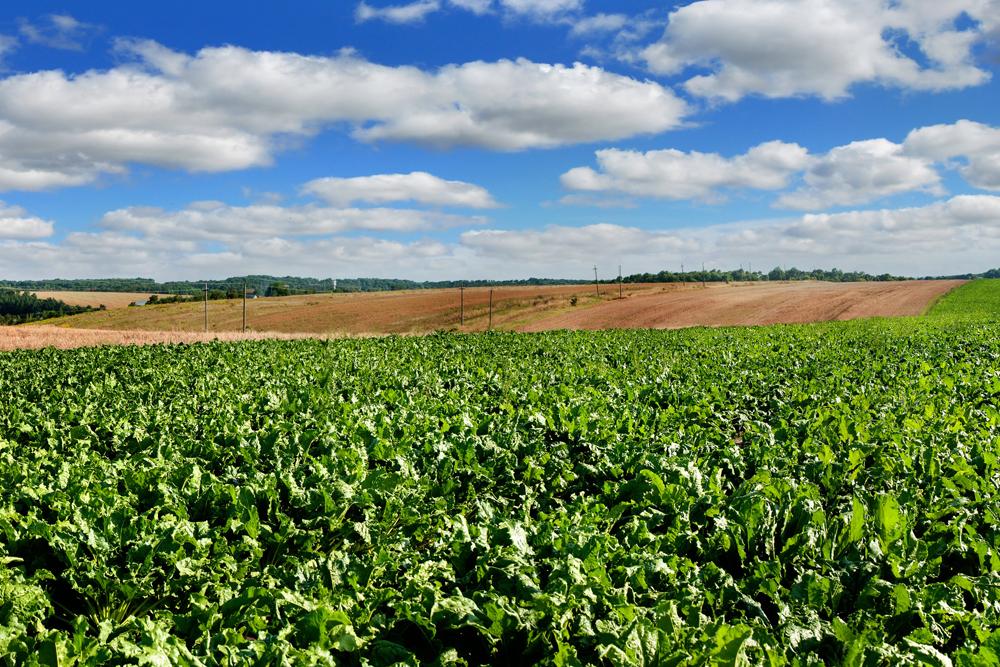 Поля агрохолдинга «Мрия»