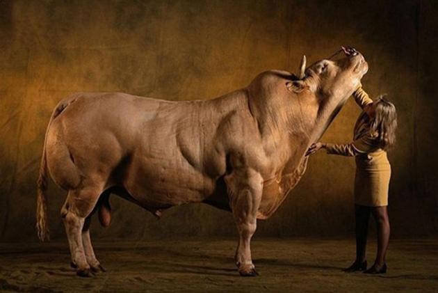 Жуткие коровы-мутанты