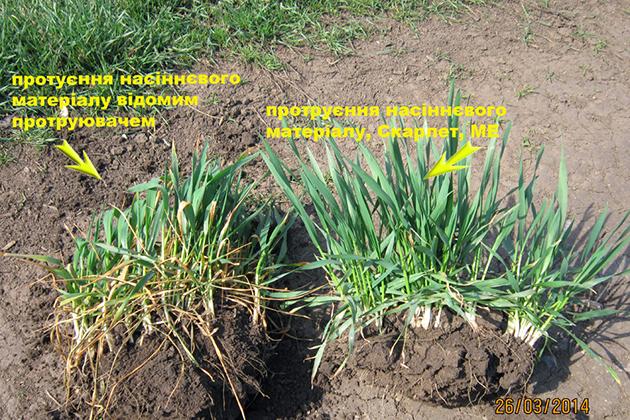 «Щелково Агрохим Украина» в который раз показывает эффективность продукции компании