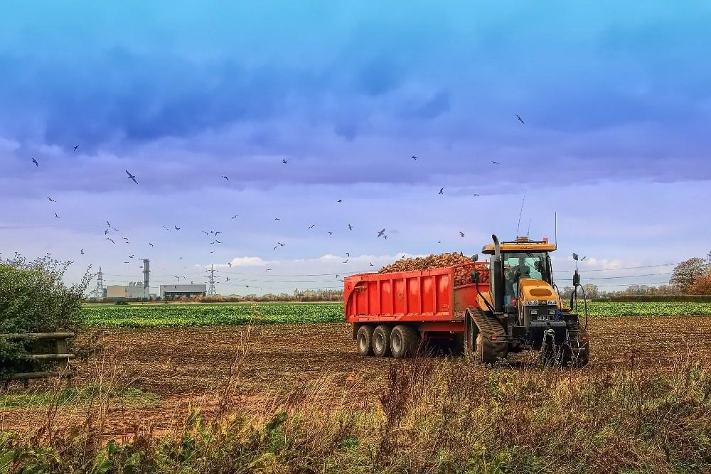 Уборка урожая сахарной свеклы в поле Линкольншира