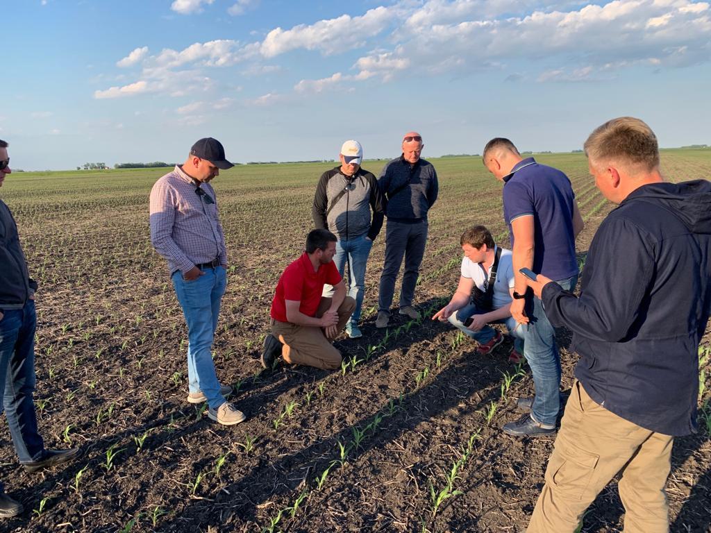 Участники агротура изучают посевы кукурузы