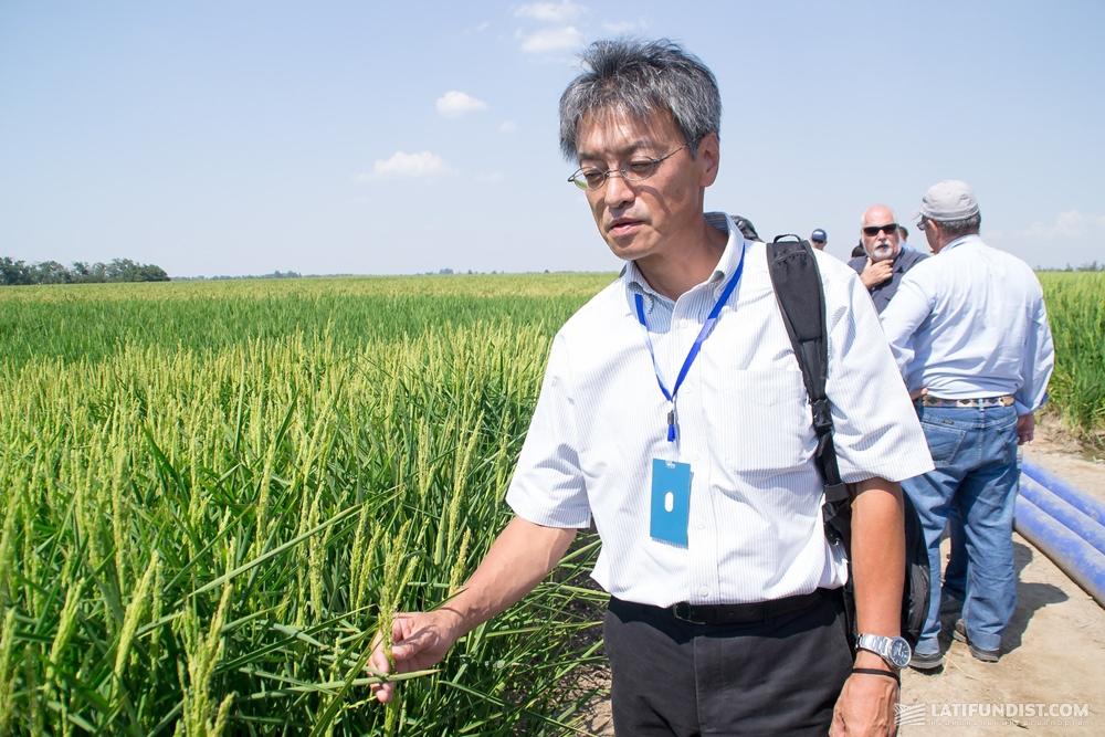 Масанори Тойота, профессор университета Кагава (Япония)