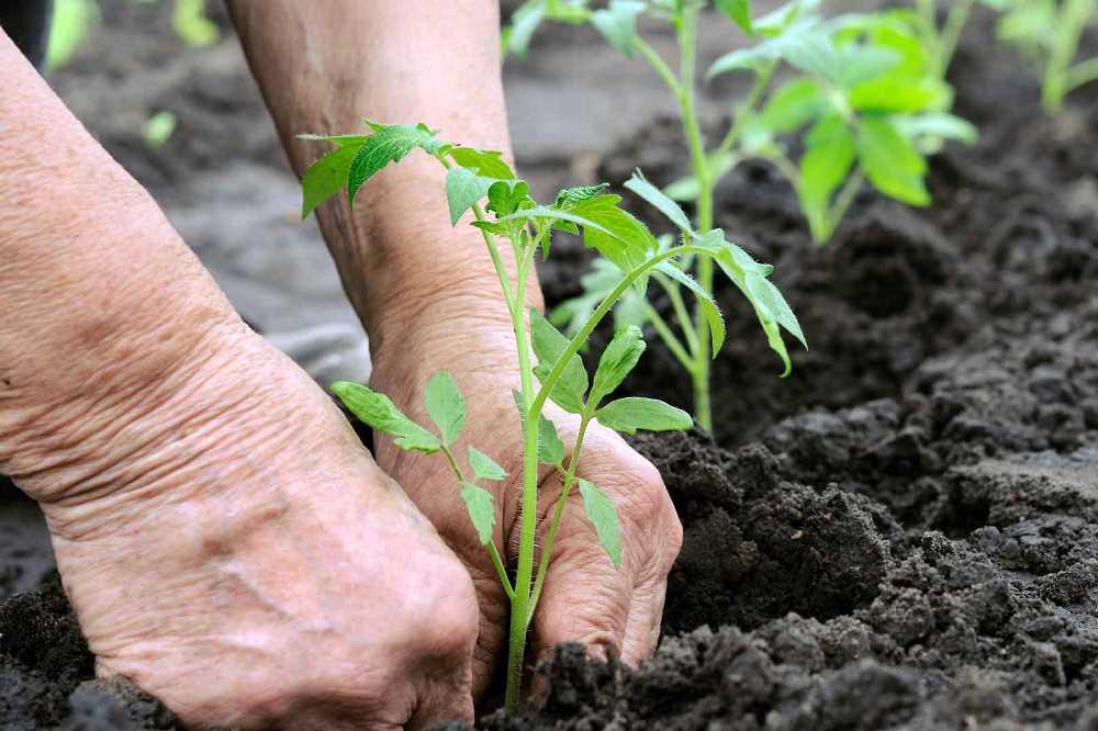 В органику в Украине записывают все, что выросло на огороде, балконе, в домашних или фермерских хозяйствах