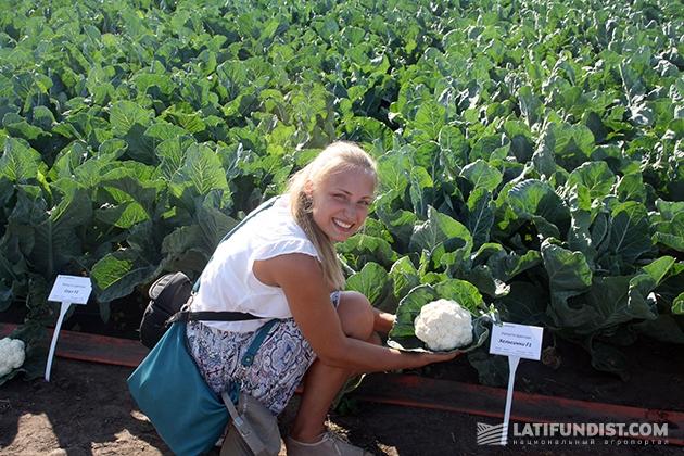 Нашей коллеге Татьяне Приходько приглянулась цветная капуста