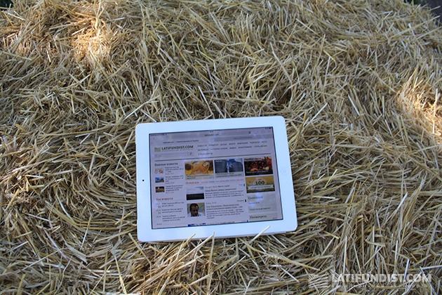 И на Дне поля не забывают читать Latifundist.com