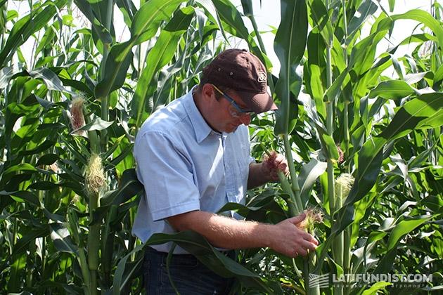 Владимир Андрущенко осматривает гибрид кукурузы