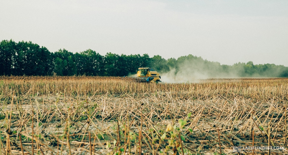 Уборка подсолнечника в сельхозкооперативе «Багачанский»