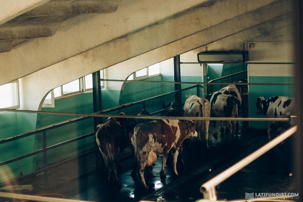 Молочная ферма «Скифа»