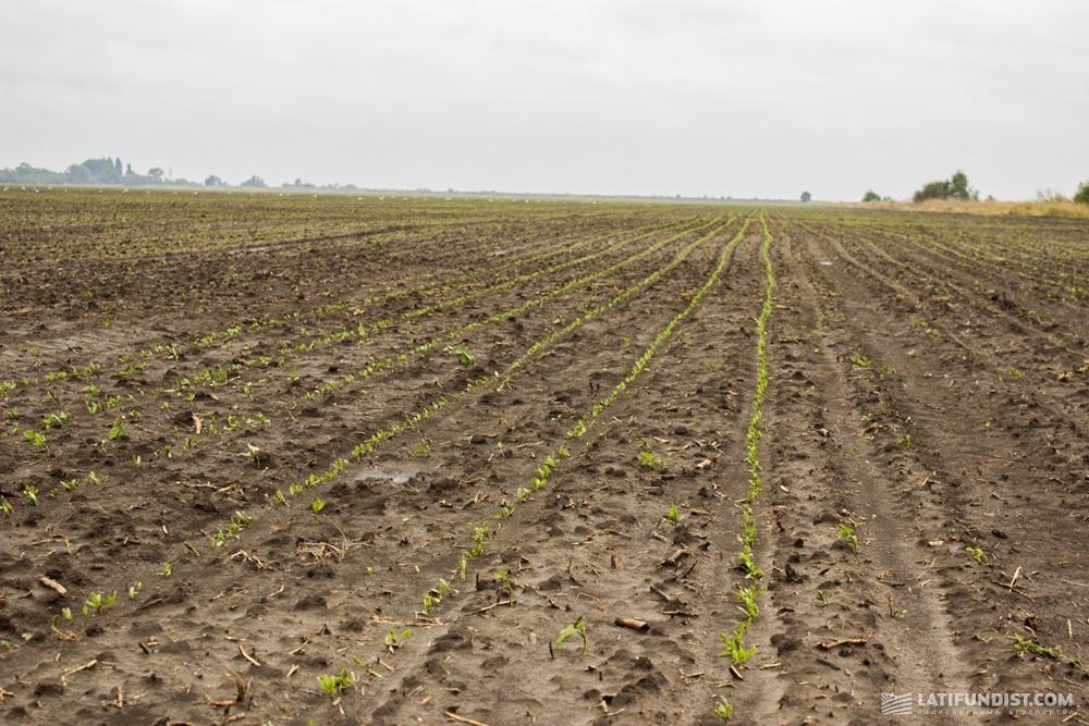 Посевы семян сахарной свеклы «Агро-Соя»