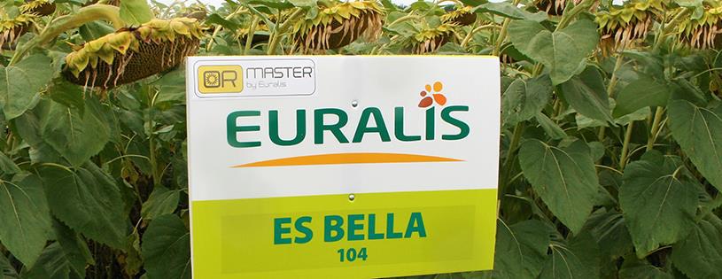 Демонстрационные посевы подсолнечника Euralis