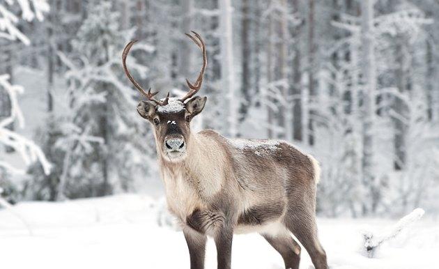 В Норвегии под пастбища определили приблизительно 40% ее территории