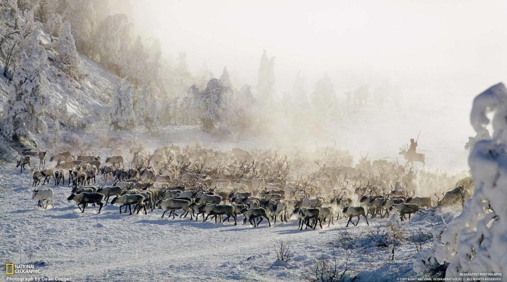 Пастухи при любой погоде круглые сутки следят за животными