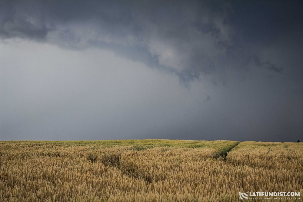 Storm developing above a wheat field in Ukraine