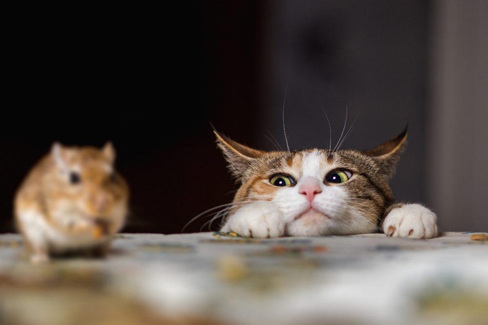 Одна кошка, которая охотится на мышей, ежегодно может «спасти» до 10 т зерна