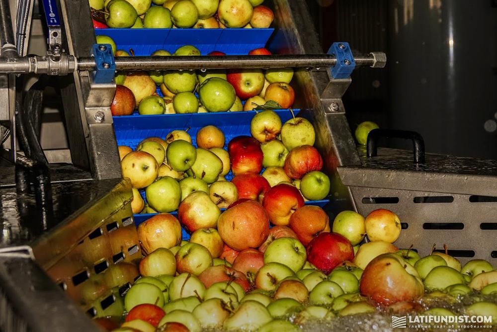 Процесс переработки яблок