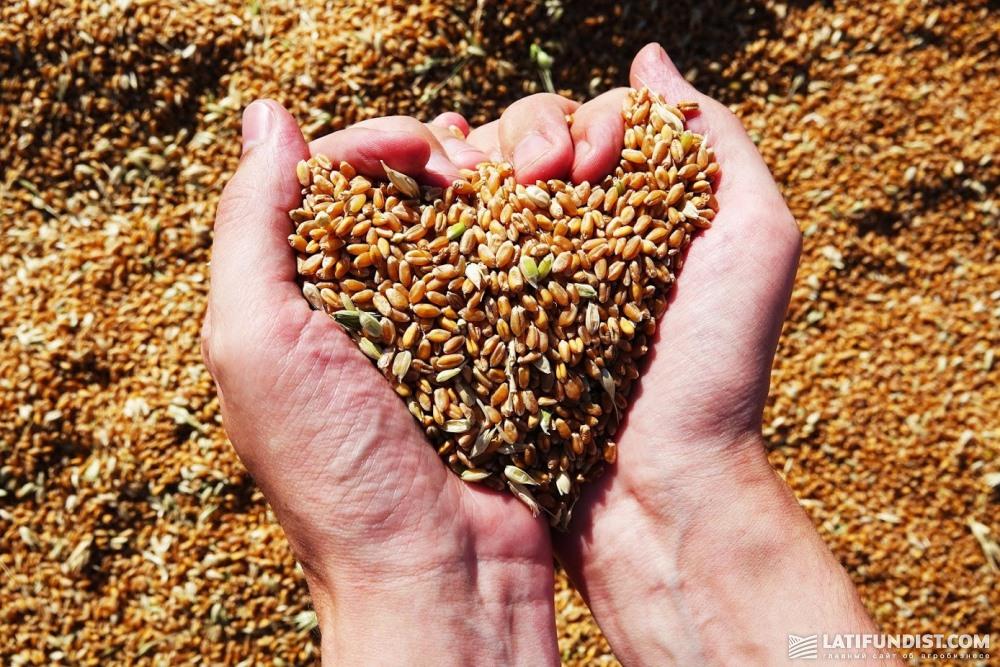 Пшеница в «НИБУЛОНе»