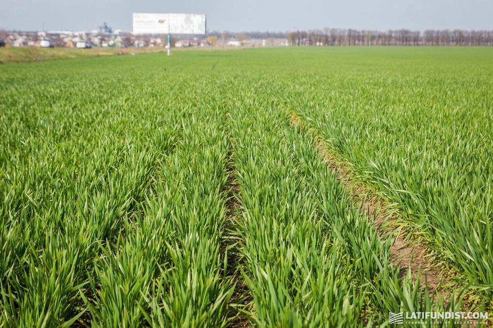 Поле предприятия «Приват-Агро-Белозерье» (входит в структуру «Приват-Агрохолдинг»)