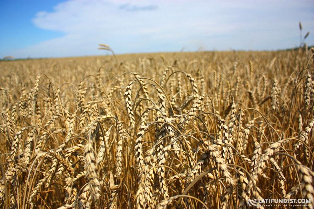 Украина — одна из самых важных в мире стран в сфере сельского хозяйства