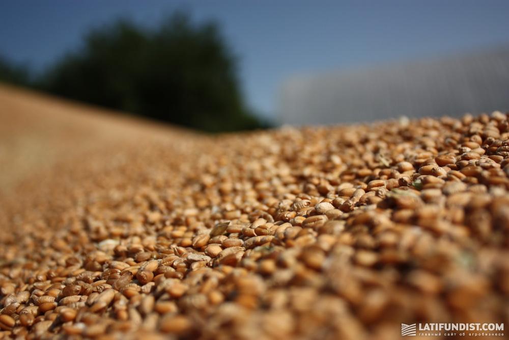 Фермеры начинают сами экспортировать зерно