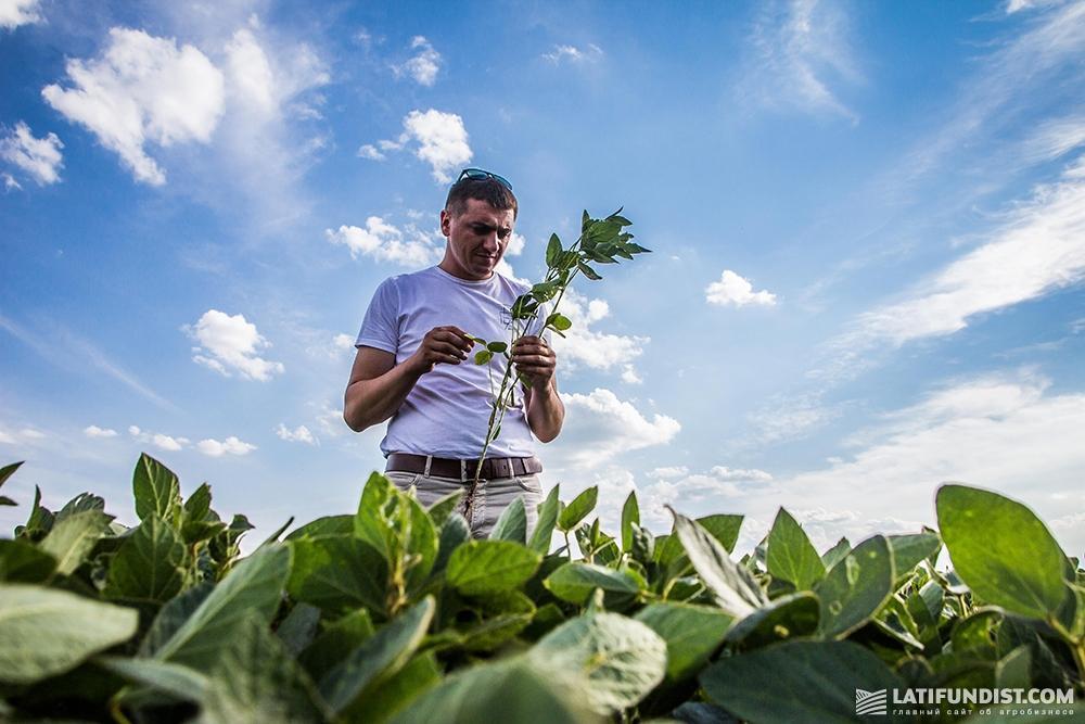 Алексей Сидорчук изучает посевы