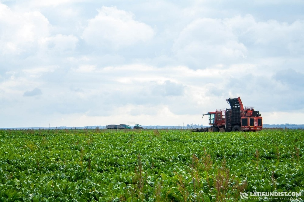 Уборка урожая сахарной свеклы на поле компании «Сварог Вест Груп»