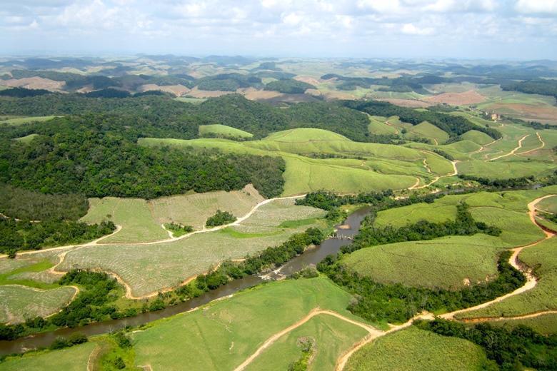 Поля сахарного тростника в Бразилии
