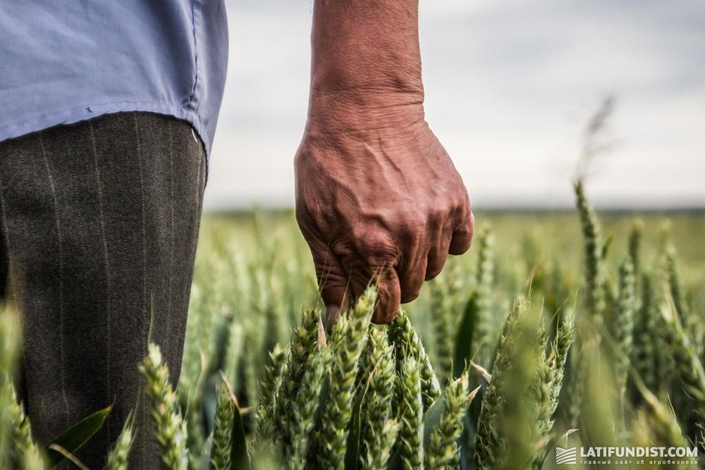 Региональный агроном — это в большей мере практик, который занимается планированием и организацией работы, наблюдением в своем хозяйстве или регионе
