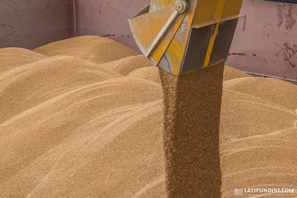 Погрузка пшеницы на судно