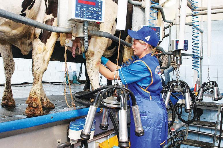 Государство должно дотировать каждый литр произведенного молока