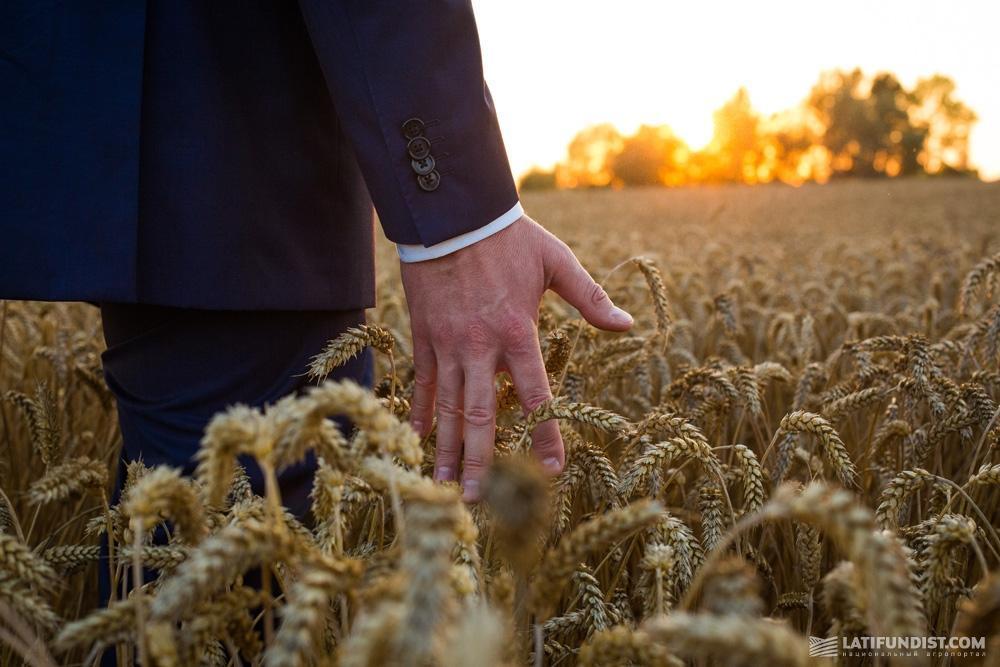 В поле пшеницы