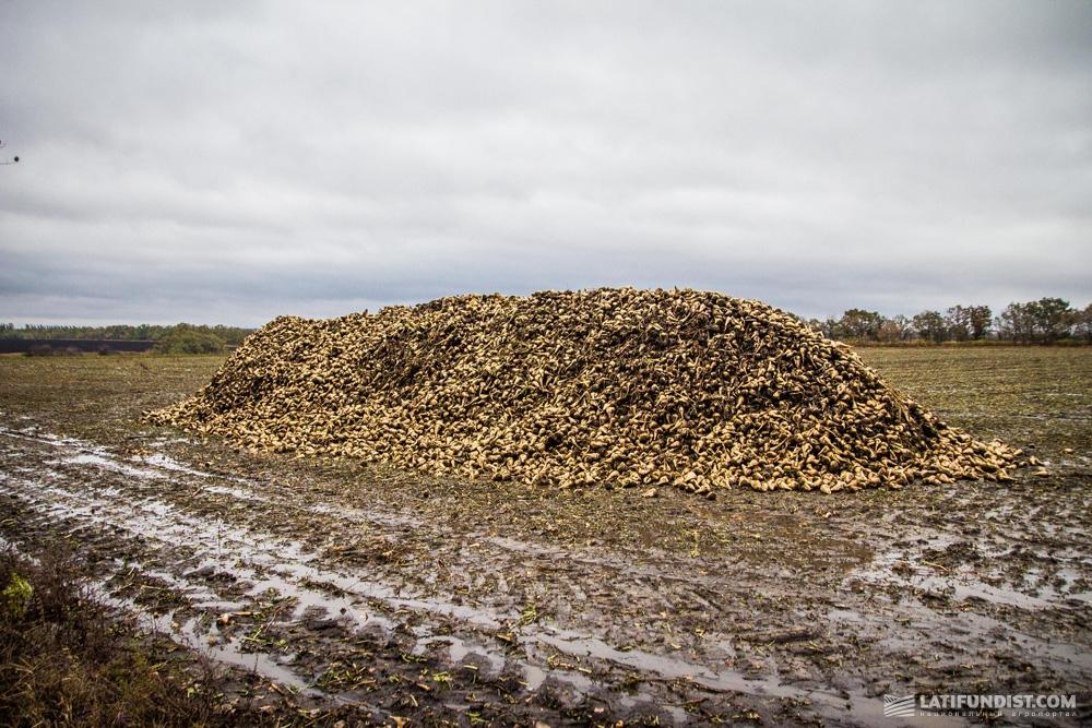 Кагаты сахарной свеклы компании «УкрАгроКом»