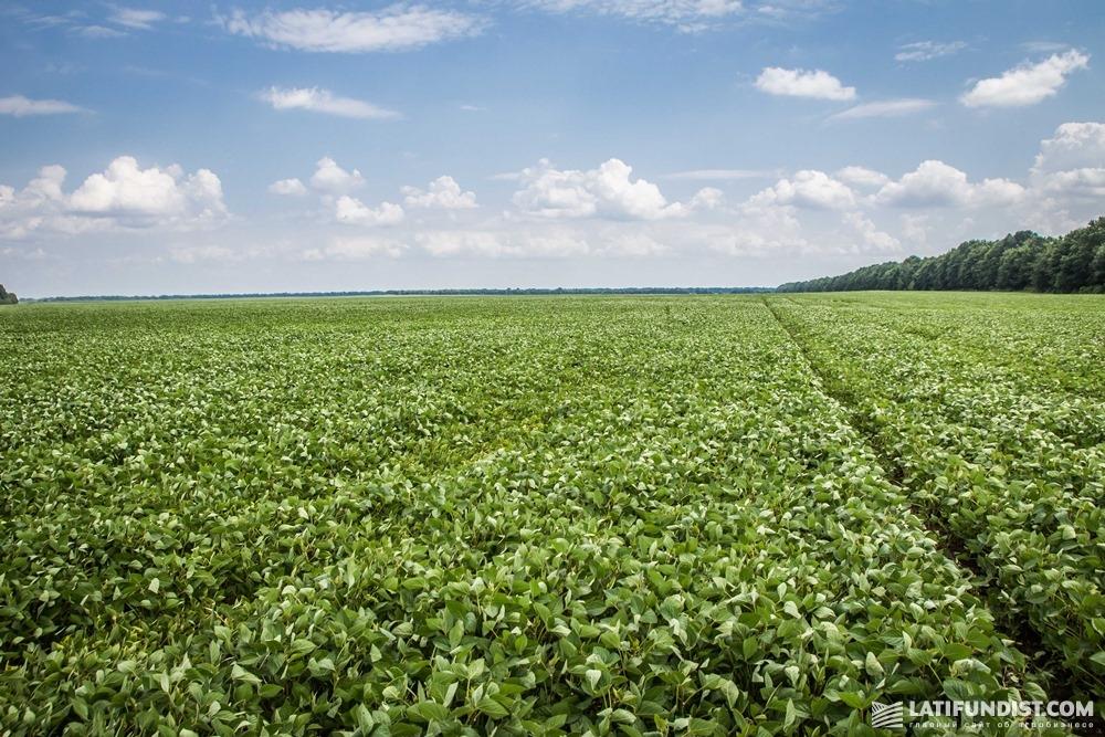 Посевы сои «Барышевской зерновой компании»