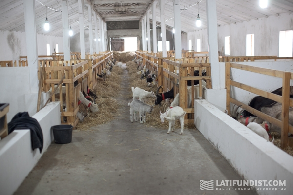 Своими руками мини ферма для коз