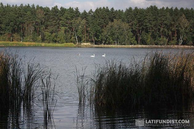 Озеро Белое возле села Хоцьки