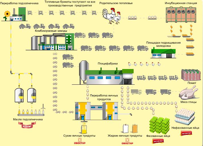 Производственный цикл «Овостар Юнион»