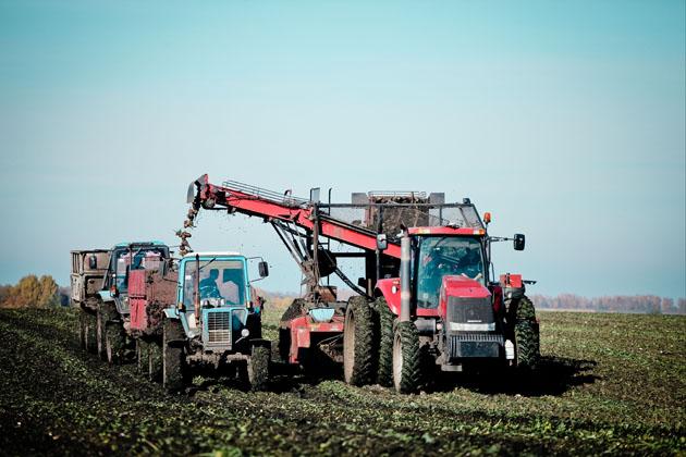 На полях «Астарты» собирают сахарную свеклу